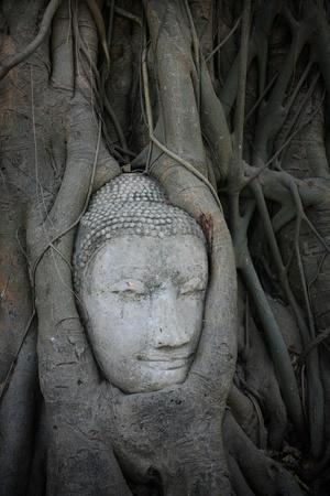 Ornament: Sandstone Buddha head in the tree at Maha-tad wat in Ayutthaya, Thailand photo