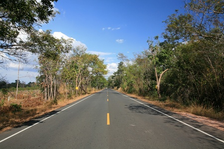 Transportation background: empty straight asphalt street with natural tree environment beside