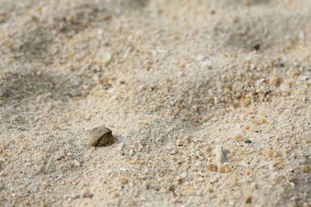 Small hermit crab on white sand  photo