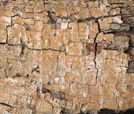 Detailed texture  closeup of broke tree bark photo