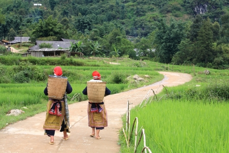 Hilltribe women near paddy fields walking up to their village in Sapa, Vietnam Standard-Bild