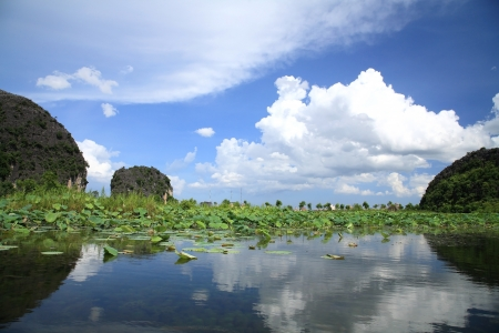 Natural scenic of paddy field and lotus along the Ngo Dong river against blue sky at Tam Cocin Ninh Binh, Vietnam Stock Photo - 14686260