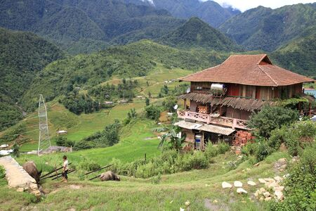 A child herding buffaloes on terraced rice fields near traditional hill tribe house at Cat Cat village in Sapa, Vietnam