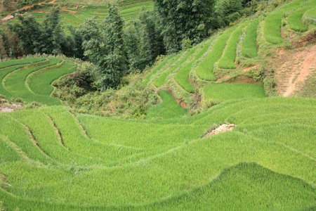 Aerial view of terraced rice fields at Cat Cat village in Sapa, Vietnam photo