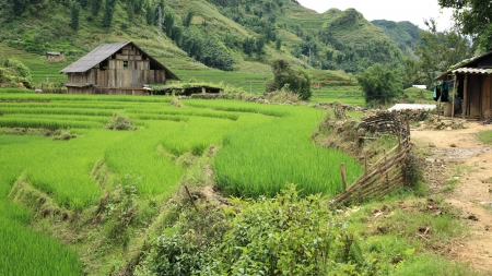 Traditional Black Hmong s house near green terraced rice Field at Cat Cat village in Sapa, Vietnam photo