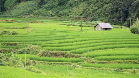 Isolated house on green terraced rice fields at Red Dao Ethnic Minority in Sapa, Vietnam  photo