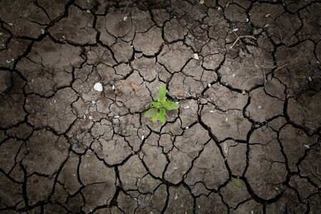 Alive plant on dried cracked earth photo