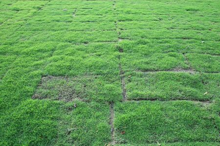 Arrangement of grass blocks at the garden photo