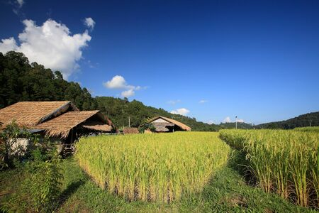 Farmer house near terraced rice field at Mae Klang Luang in Chiang Mai, Thailand   photo