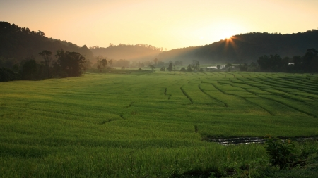 Terraced rice field at morning sunrise in Mae Klang Luang, Chiang Mai photo