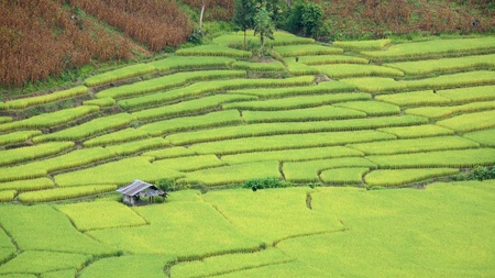 Aerial view of house at rice field terraces at northern Thailand photo