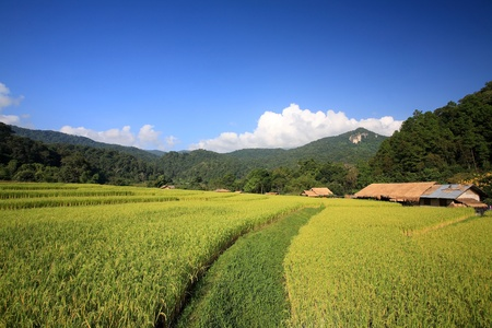 Terraced rice field and Farmer house at Mae Klang Luang in Chiang Mai, Thailand  photo