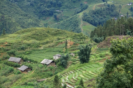 Wooden houses on terrace rice field in Sapa, Vietnam photo
