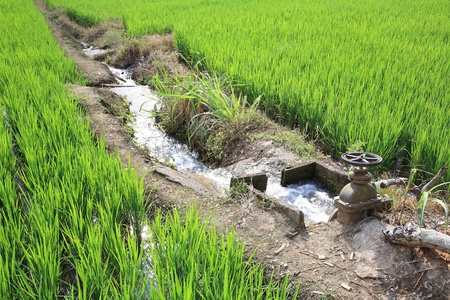 Irrigation water into rice field