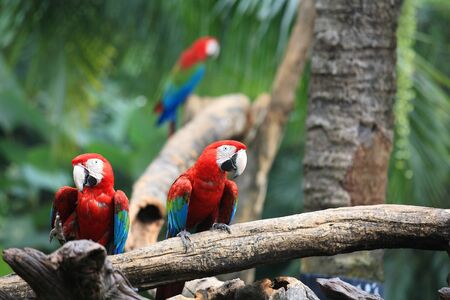Macaw parrots standing on the tree photo