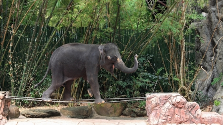 Show of Adorable elephant walking on steel bar  Stock Photo - 17087221