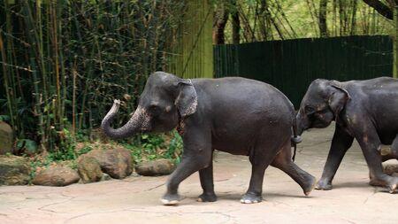 Adorable elephants show running Stock Photo - 17087179
