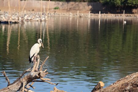 Egret standing on twig near the pond Stock Photo - 17689112