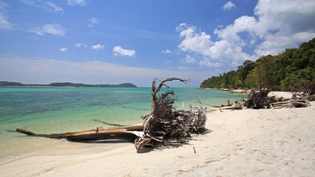 Beautiful tropical beach with lying tree trunks at Koh Adang in Satun, Thailand photo
