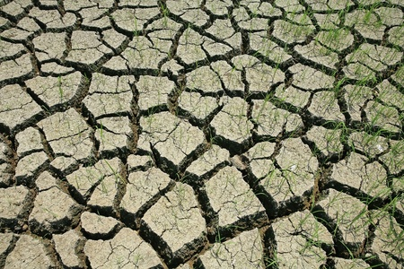 Dried cracked mud with alive grass Stock Photo