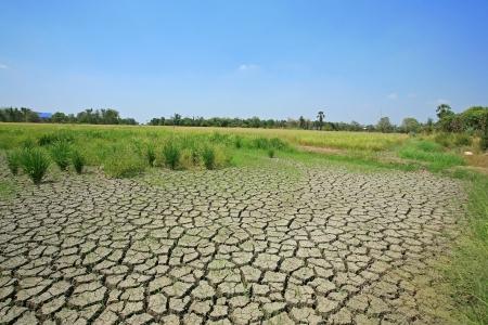Crepa terra secca al campo di riso Archivio Fotografico - 18762080