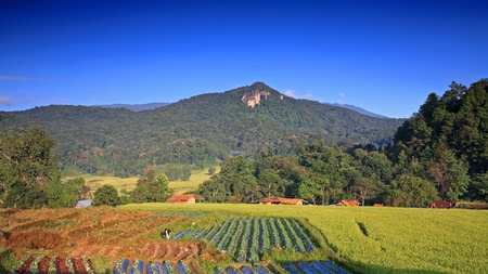 Terraced rice field and vegetable farm against blue sky and mountain at Mae Klang Luang in Chiang Mai, Thailand