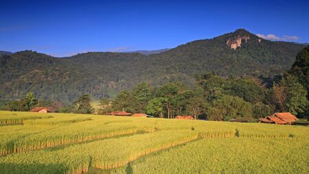 Beautiful landscape of terraced ripe rice field against blue sky in Chiang Mai, Thailand photo