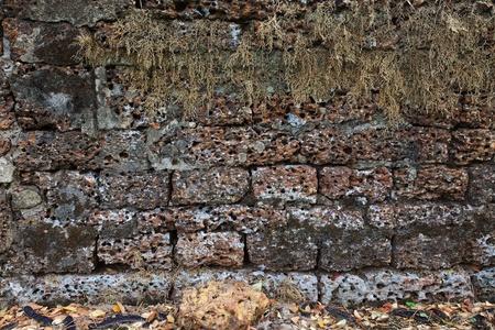 Grunge laterite stone brick wall with dry climbing plant  photo