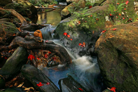 kradueng: Beautiful red maple leaves at waterfall of Phu Kradueng national park in Loei, Thailand Stock Photo