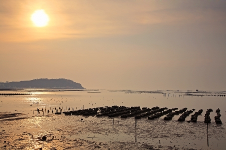 chonburi: Beautiful sunset at Oyster Farm in Thailand