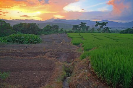 Terraced rice field at sunset by hdr shot in Chiang Mai, Thailand photo