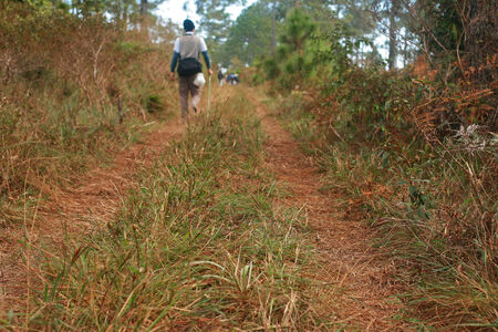 kradueng: Hiker walking on the forest path at deep jungle, Phukradueng national park in Loei, Thailand Stock Photo