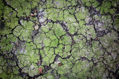 Crack dirt or earch with alive green plant  Textured background  photo