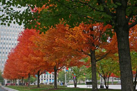 Autumn colorful trees at Millennium park in Chicago, US photo