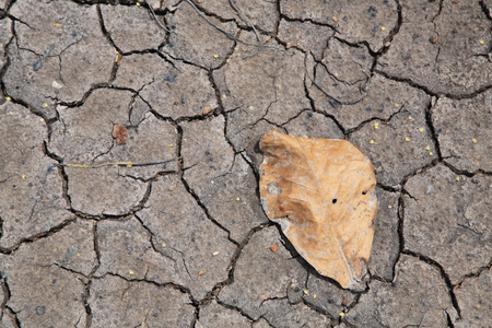 barrenness: dry  leaf on the erosion earth (Natural disaster) Stock Photo