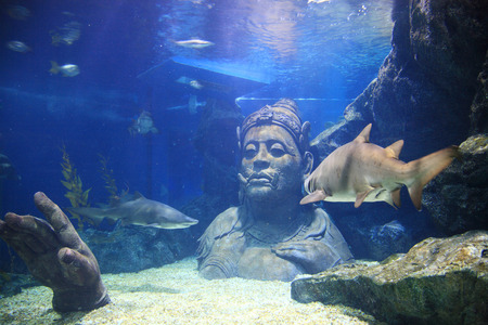 Thai traditional giant with many sharks in the water at Siam Ocean world Aquariam in Bangkok, Thaiand 写真素材