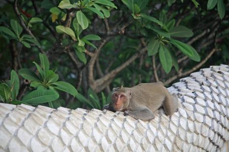 banister: Adorable monkey relaxing on dragon skin banister of Thai temple