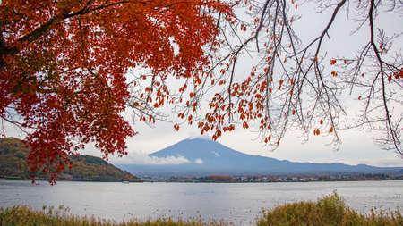 saiko: Mt.Fuji with autumn red maple leaves in Kawaguchiko lake, Japan Stock Photo