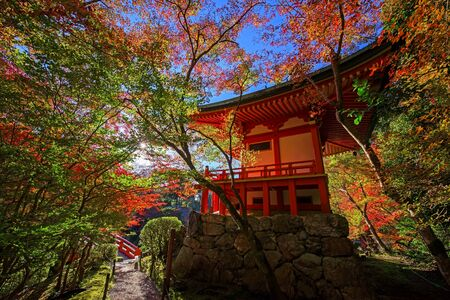 twentysomething: Colorful tree leaves around Daigoji temple at autumn against sunbeam in Kyoto, Japan