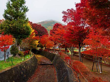 kawaguchi: maple corridor or Momiji Kairo at autumn in Kawaguchiko, Japan