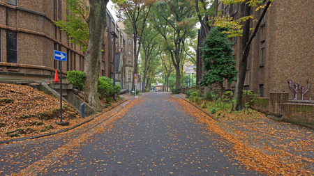 lords: Hongo campus of University of Tokyo in Autumn. The main Hongo campus occupies the former estate of the Maeda family, Edo period feudal lords of Kaga Province. Stock Photo