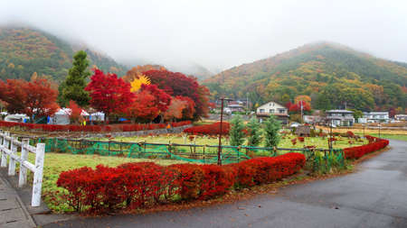 momiji: Autumn foliage at Maple corridor or Momiji Kairo near local village in Kawaguchiko,Yamanashi, Japan Stock Photo