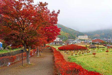 momiji: Autumn foliage at Maple corridor or Momiji Kairo in Kawaguchiko,Yamanashi, Japan