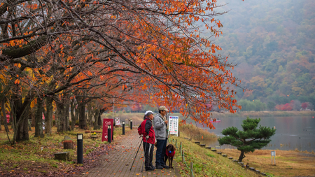 sightsee: KAWAGUCHIKO, JAPAN - November 10,, 2015: Unidentified old Japanese men with cute labrador dog at Kawaguchiko lake to sightsee Mt.Fuji and the lake with Autumn foliage.