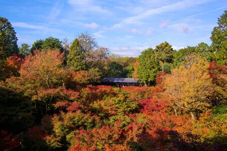 treetops: Autumn foliage against blue sky at Tofuku-ji temple in Kyoto, Japan. Here is very famous to see autumn maple leaves in autumn season. Editorial