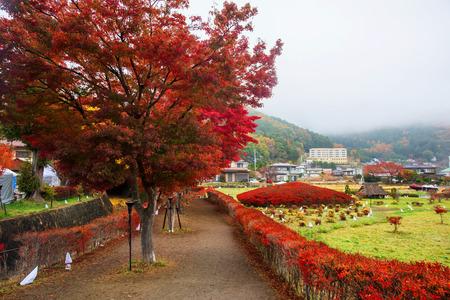 kawaguchi: Maple tunnel in autumn at Kawaguchiko, Japan Stock Photo