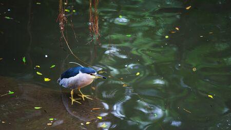 bid: Cute bid standing near the pond with reflection