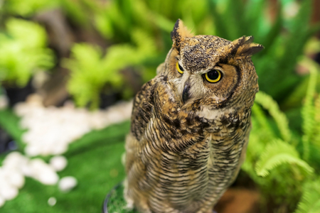 virginianus: Great horned owl (Bubo virginianus) at the garden Stock Photo