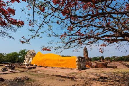 erythrina: Giant Buddha statue with red flower of Erythrina variegata tree in the historical Park of Ayutthaya, Thailand Stock Photo