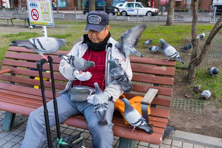 odori: SAPPORO, HOKKAIDO, JAPAN - APRIL 24, 2016: Unidentified old man feeding food to may pigeon birds in Odori park, Sapporo. Editorial